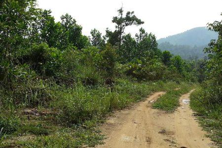 AGRICULTURE LAND   LENGGENG