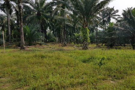 Port Dickson, Seremban, N. Sembilan lands
