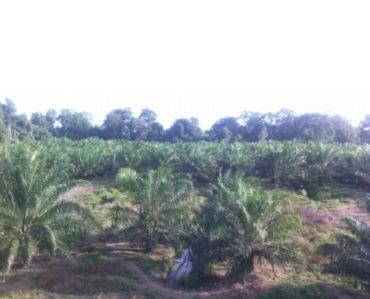 Rompin Land, Pahang, Negeri Sembilan