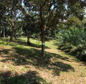 malaysiapropertys kapar agri land