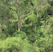 Titi rubber estate land malaysiapropertys.com 2
