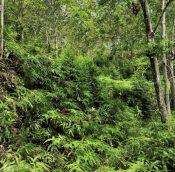 Titi rubber estate land malaysiapropertys.com 4