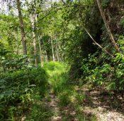 Titi rubber estate land malaysiapropertys.com 5