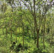 Titi rubber estate land malaysiapropertys.com